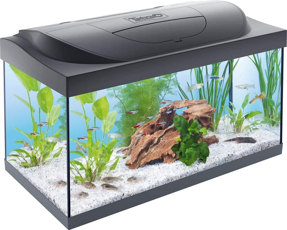 tienda peces online barata